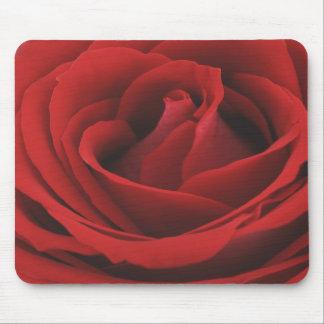 Schauen Sie von einer Samt-reichen Roten Rose Mauspads