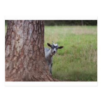 Scherzen Sie (Ziege) das Spähen von hinten einen Postkarte