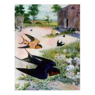 Scheunen-Schwalben fliegen um alte Außengebäude Postkarte