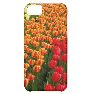 Schicksals-Geschenke iPhone 5C Hülle