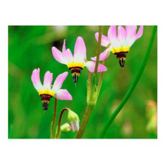 Schießen-Stern-Wildblumen im Auftrag schleppen Postkarte