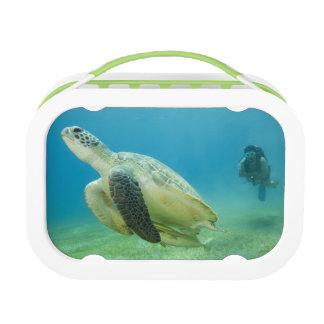 Schildkröte Brotdose