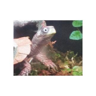 Schildkröte Dee Leinwanddruck