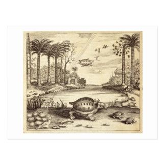 """Schildkröte-Eier, die vorbei, """"von der China illus Postkarten"""
