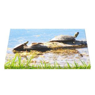 Schildkröte eingewickelte Leinwand