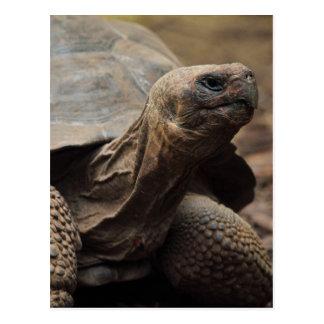 Schildkröte-Foto Postkarte