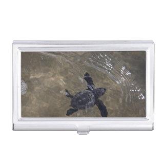Schildkröte Hatchlings 2 Visitenkarten Dose