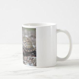 Schildkröte Kaffeetasse
