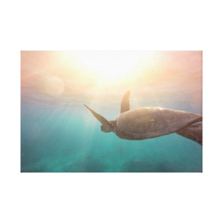 Schildkröte Leinwanddruck