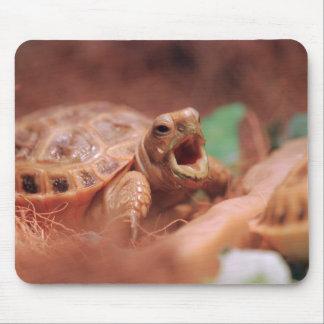 Schildkröte Mousepads