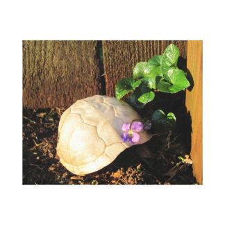 Schildkröte-Muschel, die Sonnenuntergang sich Leinwanddruck