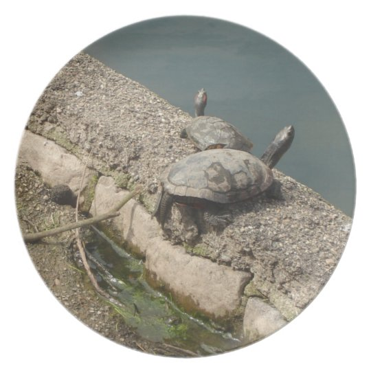 Schildkröte-Platte Teller