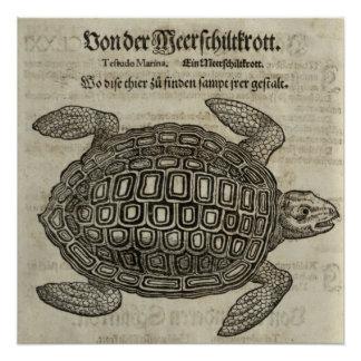 Schildkröte Poster