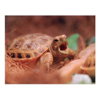 Schildkröte Postkarten