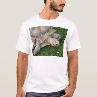 Schildkröte T-Shirt