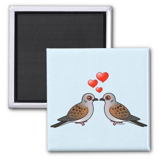 Schildkröte-Tauben in der Liebe Magnete