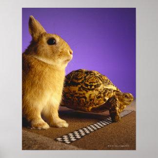 Schildkröte und die Hasen Plakatdrucke