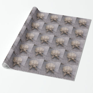 Schildkrötematerial Geschenkpapier