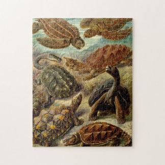 Schildkröten durch Haeckel Puzzle