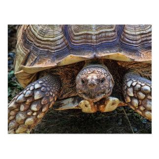 Schildkröten-Foto Postkarte
