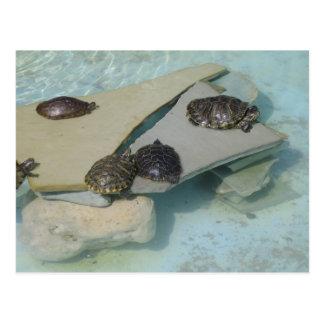 Schildkröten Postkarte