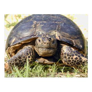Schildkröten-Postkarte