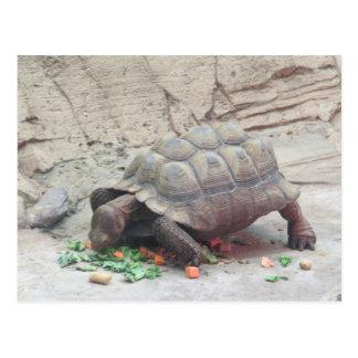 Schildkröten-Schildkröte-Reptil Postkarte