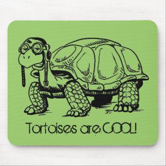 Schildkröten sind COOL Mousepad