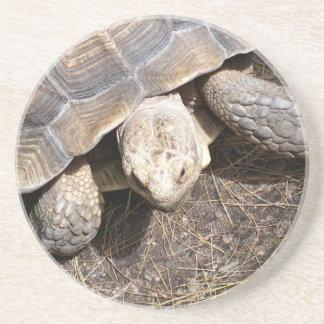 Schildkröten-Untersetzer