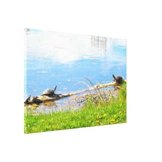 Schildkröten wickelten Leinwand ein