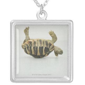 Schildkrötenoberseite - unten, balancierend auf versilberte kette