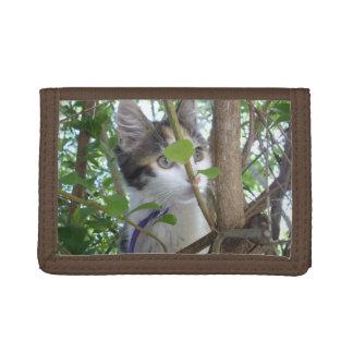 Schildpatt-Kätzchen in den Baum-Spitzen,