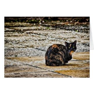 Schildpatt-Katze Karte