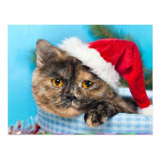 Schildpatt-Katze Schnurren-fect Ferienzeit Postkarte