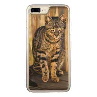 Schildpatt-Katzen-Porträt, Nahaufnahme-Tier-Foto Carved iPhone 8 Plus/7 Plus Hülle
