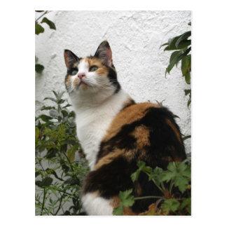 Schildpatt und weiße Katze Postkarte