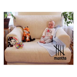 Schilf - 5 Monate Postkarte