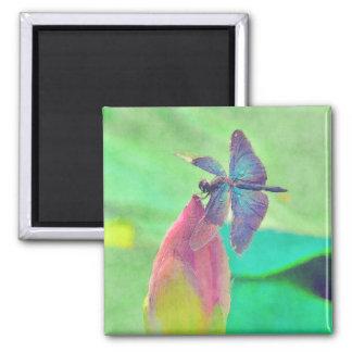 Schillernde blaue Libelle auf Wasserlilie Quadratischer Magnet