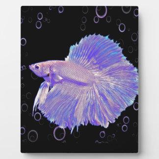 Schillernde lila kämpfende Fische Fotoplatte