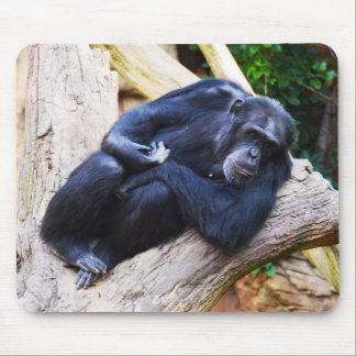 Schimpanse an der Erholung Mauspads