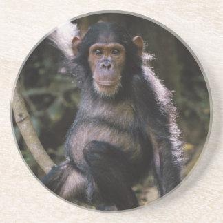 Schimpanse-junge Frau Untersetzer
