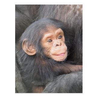 Schimpanse Postkarte