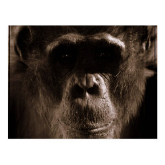 Schimpanse-Postkarte Postkarte