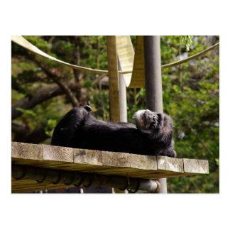 Schimpanse-Stillstehen Postkarte