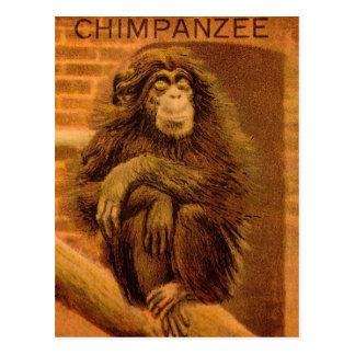Schimpanse-Vintage magische Laternen-Dia 1890s Postkarte