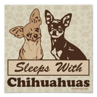 Schlaf mit Chihuahua Poster
