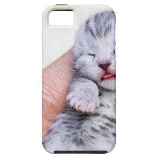 Schlafen neugeborene silberne Tabbykatze in der iPhone 5 Hülle
