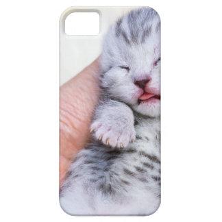 Schlafen neugeborene silberne Tabbykatze in der Schutzhülle Fürs iPhone 5