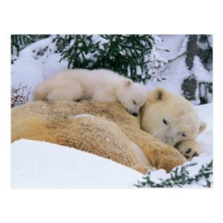 Schlafenbär Postkarte