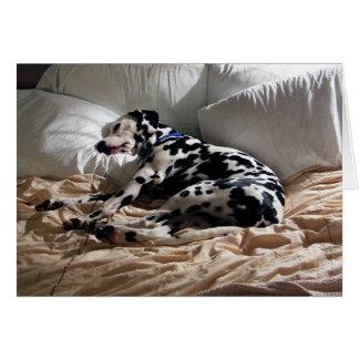 Schlafender Dalmatiner Karte